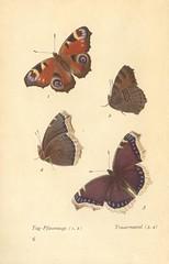 papillons d 2