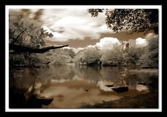 Lake at Moinhos de Vento Park - IR