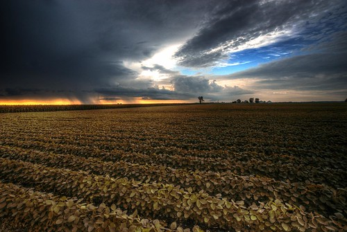 Dry Harvest