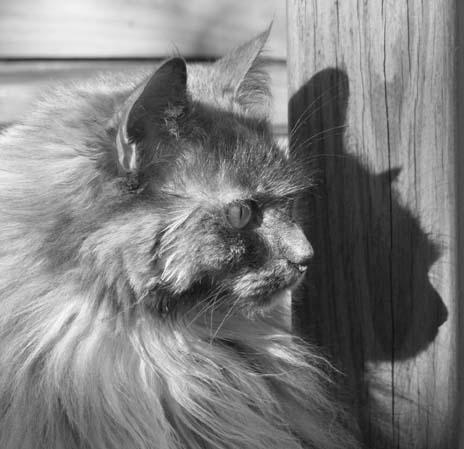 Marissa&Shadow