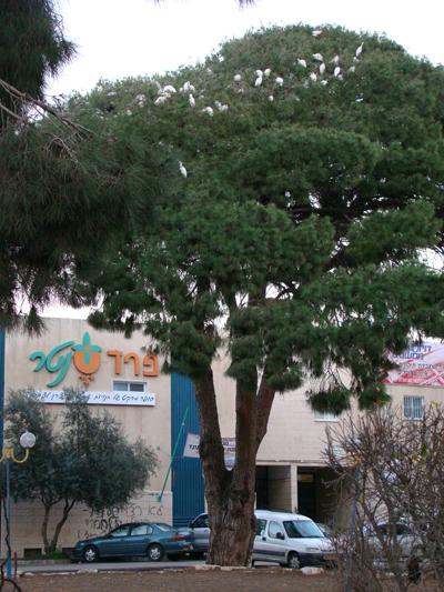 העץ הנדיב..