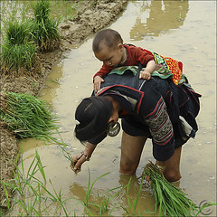 International Women's Day (NaPix -- (Time out)) Tags: portrait asia southeastasia day rice paddy mother womens vietnam explore international journalism planting sapa hmong internationalwomensday explored explorefrontpage napix