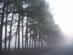 disappearing trees (n7147tango) Tags: trees nature fog tn martin tennessee headlights visible visibility