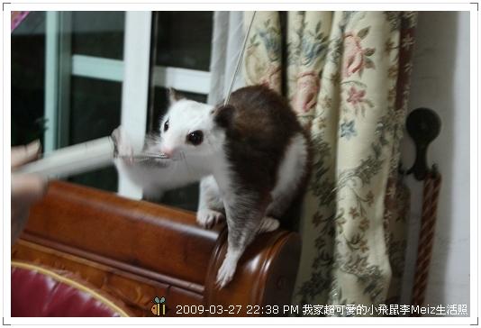 09年二三月小飛鼠Meiz生活照 (29)