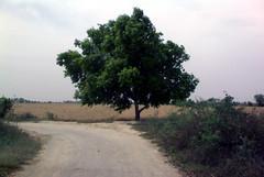 The shadow of nature (jas-B) Tags: road shadow tree corner turn village saran haryana kaithal