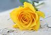 يآورد ' أبسئلك ! ليه التفآؤل و الفرح يبقى ثوآني مآيدوم !¬ (Maryam.Ibrahim) Tags: from wood flower love yellow sony dslra100 theunforgettablepictures