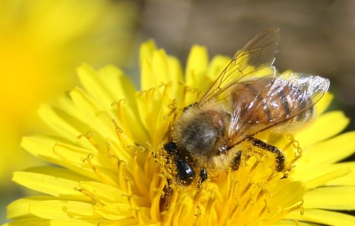 05-03-bee