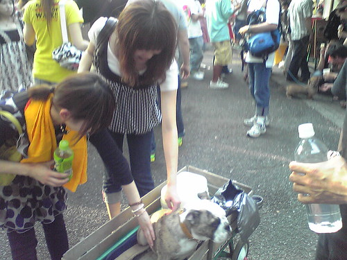 Pretty ladies patting cute dog