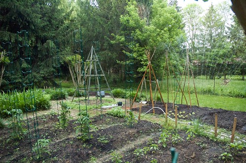 The garden, fully planted