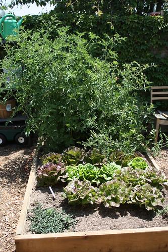Garden progress May 002.JPG
