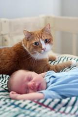 Standing Watch (Rich Renomeron) Tags: baby cat print 50mm canoneos350d canoneosdigitalrebelxt guarding 3334 canonef50mmf18ii aaronglen
