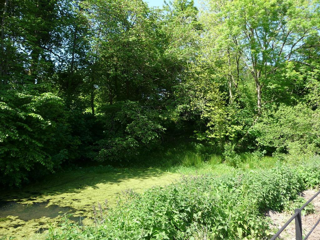 Pond 161