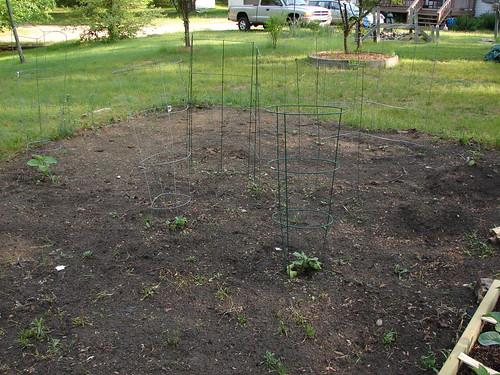 The squash garden