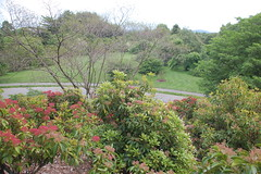 Arnold Arboretum, 18 May 2010: View from Busse...