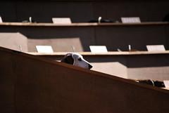 Dachshund UN (Jellibat) Tags: dogs public festival gardens museum carlton performance arts sausage australia melbourne victoria dachshund un artists installation publicart emerging cultural puppys