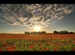 The RED army (Claudio Morlok) Tags: flowers sunset red summer italy primavera nature field landscape spring nikon tramonto estate dusk tripod country wide tokina campagna poppies claudio rosso legacy lombardia hdr papaveri sunstar agricoltura d90 3xp photomatix 1116 anawesomeshot morlok bestofmywinners