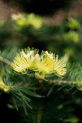 Negative0-15-14(1) (Hoviak) Tags: tree green nature pine analog bokeh zenit ttl needles