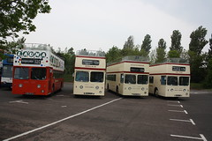 Sea Dog Lineup (lazy south) Tags: uk sea england dog bus day open metro britain top south rally running devon topper leyland paignton torbay cammell atlantean 931gta 932gta 925gta 724xuw