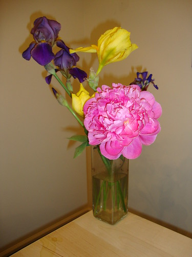 flowers from Jasmine's garden