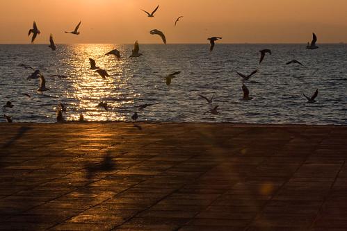 A walk by the sea I