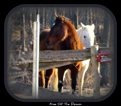 Horses waiting for the new snow (Free Of The Demon) Tags: morning home water beautiful america wow january nj shore beaches jersey anthony greatshot picturesque soe smrgsbord enjoylife galope razzie expressyourself supershot bej fineartphotos platinumphoto anawesomeshot almostanything ysplix amazingamateur theunforgettablepictures brilliant~eye~jewel elitephotography awwwed shiningstar yourpreferredpicture flickrstas life~asiseeit beaut