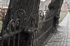 Perseverance (Jess P.C.) Tags: tree fence breakthrough aarhus perseverance 8000 rhus ridehuset mission24