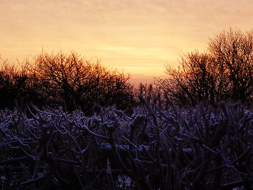 Hedge and Sunrise