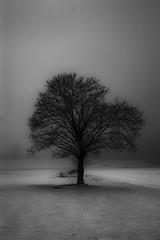 IMG_7358web ((James) AdamTaylor) Tags: winter blackandwhite snow nj negativespace adamtaylor ttrees salemcounty fogtrees contentunknowncom