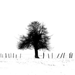 a trees winter skeleton (Bad*Wolf*) Tags: trees winter bw snow tree skyline fence worcestershire hawthorn silouhette droitwich martinhussingtree fbdg