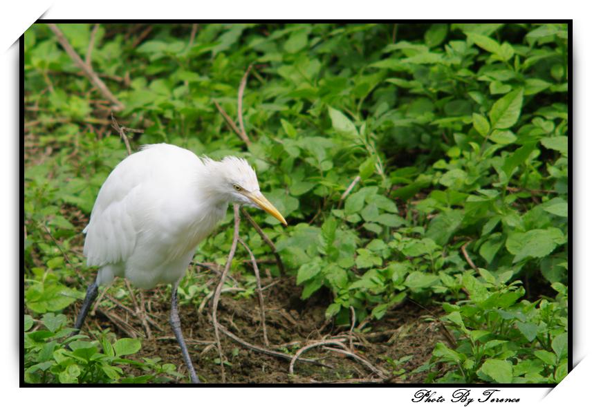 生活的無奈 in Taipei zoo