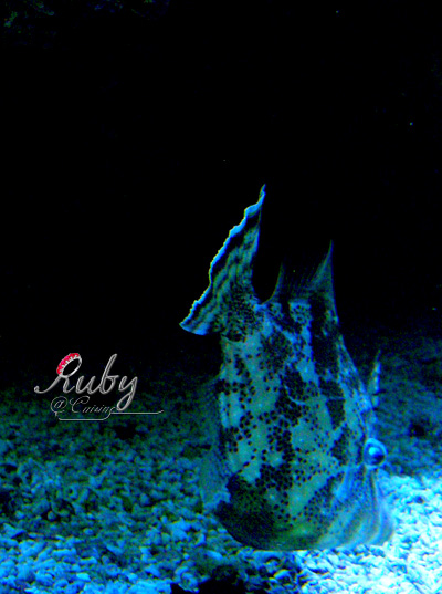 Monaco_aquarium_fish_03