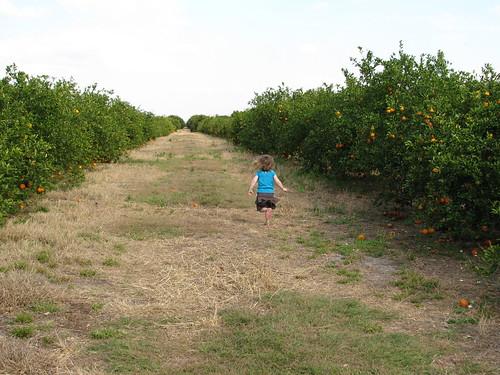 Lil running in citrus field