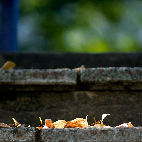 autumn_step_by_step