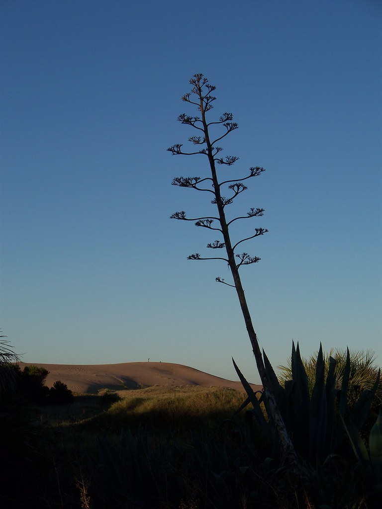 Dunes in the Distance | Costa Bonita, Argentina by katiealley on Flickr