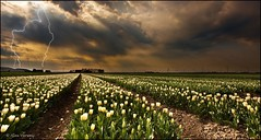 Lightning (Alex Verweij) Tags: clouds canon tulips wolken lightning 1022mm flevoland tulpen cs4 bewerkt bollenvelden bliksem 40d mywinners aplusphoto inslag platinumheartaward alexverweij