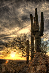 Spring Sunset Over North Phoenix in HDR III (eoscatchlight) Tags: sunset arizona cactus sky sun southwest phoenix clouds desert bluesky freeway saguaro