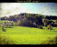 ~ spirit of the forest ~ (together8) Tags: green eye texture field forest landscape spirit sunrays tistheseason worldbest nikond40 visiongroup memoriesbook awardtree obq vosplusbellesphotos goldenart dragondaggerawards nature´screations together8 artistictreasurechest imagesforthelittleprince daarklands eyeofthespirit