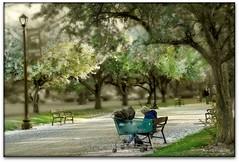 Another Springtime? (Ronaldo F Cabuhat) Tags: trees newyork green canon candid albanyny albanynewyork washingtonpark canoneosdigitalrebelxti cabuhat canonefs70200mmf28isusm washingtonparkalbanyny anotherspringtime
