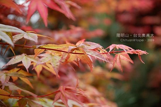 台北奧萬大。楓紅10