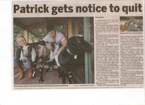 news article on paddy the goat