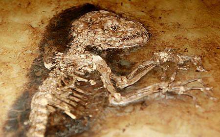 Ida fosil humano lémur