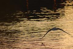 foto volo uccello