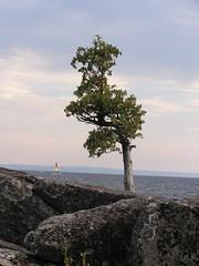 Un cdre plus fort que les autres. (Photonoumi) Tags: tree water boat eau lac arbre stjean voilier seul cdre treesubject