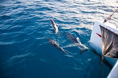 20090508 284 NaPali sunset sail (scottdm) Tags: kauai 2009 napalicoast may2009