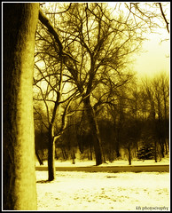 dreams of evening twilight (kennymuz) Tags: sunset snow tree monochrome sepia photography evening twilight dreams kh desires waltz kako takashi motives kennymuz
