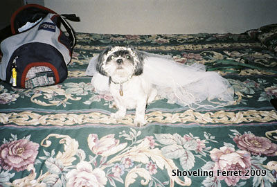 Oreo in veil