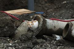 Secret walkway (H2@Japan) Tags: street japan cat tokyo nikon kitty 東京 猫 d300