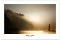 Rythm of Nature (Imapix) Tags: morning mist canada tree art nature canon island photography photo foto photographie image quebec merci tranquility qubec silence fir sapin brume peacefulness matin mistery imapix gaetanbourque 100commentgroup vosplusbellesphotos imapixphotography gatanbourquephotography