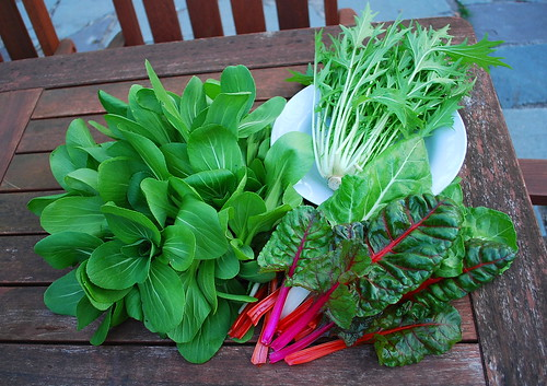 Asian Greens and Chard Harvest