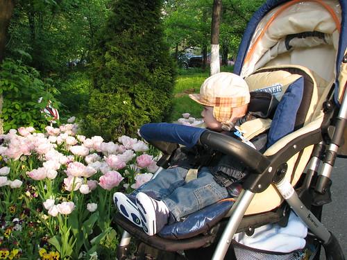 copilul si floarea